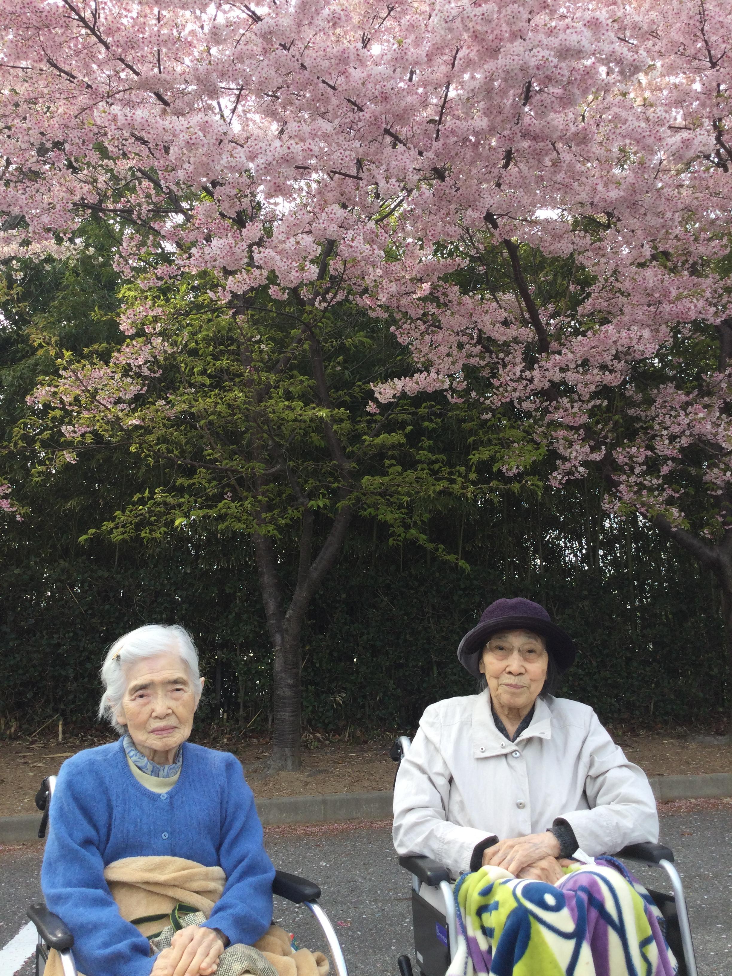 桜を見に行こう♪