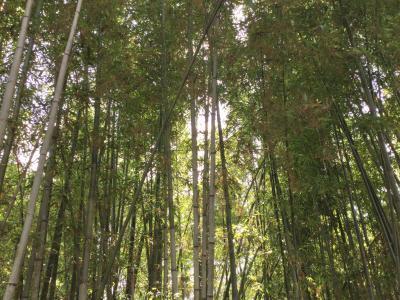 竹藪3.JPG
