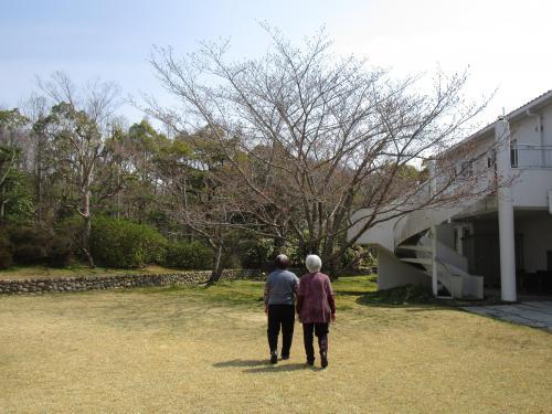 ✿中庭の桜の木 その1✿