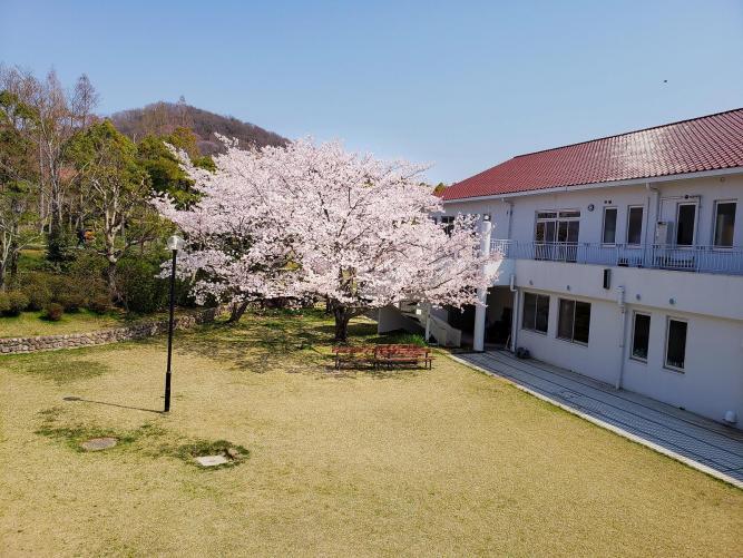 【村に春がやって来た!】