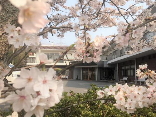 【春爛漫】花巡りツアー